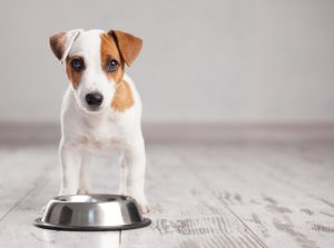 Top Dog Food Review Sites